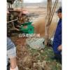 水稻苗床土壤粉碎机 经济实用款 移动式播种覆土机视频